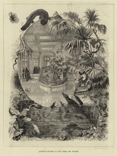 Summer-In-Winter at the Jardin Des Plantes--Giclee Print