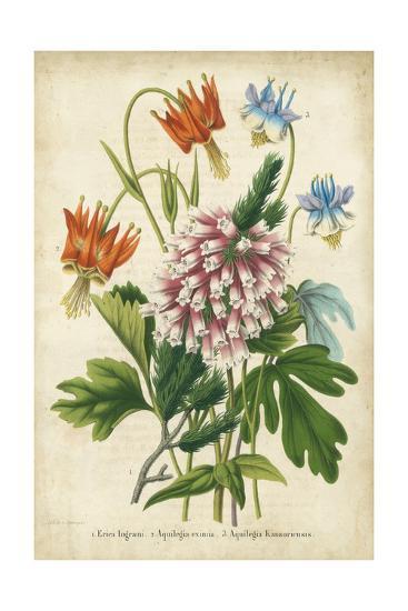 Summer Medley VI-G. Severeyns-Art Print