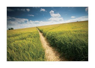 LANDSCAPE ART PRINT Woodland Path by Michael Hudson 24x16 Photograph Poster