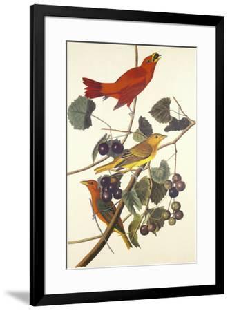 Summer Red Bird-John James Audubon-Framed Premium Giclee Print