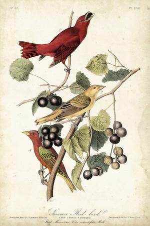 https://imgc.artprintimages.com/img/print/summer-red-bird_u-l-q1bgwu20.jpg?p=0