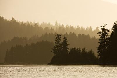 Summer Sunset Lights Rainforest Along Afognak Bay-Paul Souders-Photographic Print