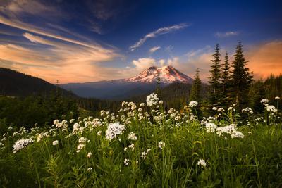 https://imgc.artprintimages.com/img/print/summer-sunset-over-cow-parsnip-wildflowers-crimson-clouds-mt-rainier-bkgd-near-ashford-wa_u-l-q19msen0.jpg?p=0