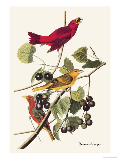 Summer Tanager-John James Audubon-Art Print