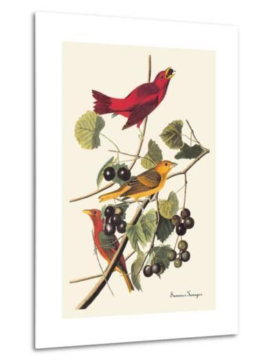 Summer Tanager-John James Audubon-Metal Print