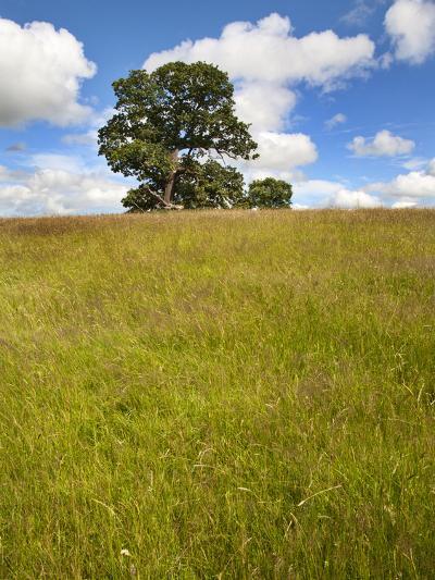 Summer Tree and Long Grass at Jacob Smith Park Knaresborough, North Yorkshire, Yorkshire, England-Mark Sunderland-Photographic Print