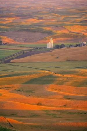 Summer Wheat, Barley and Lentil Fields, Washington, Palouse Area-Stuart Westmorland-Photographic Print