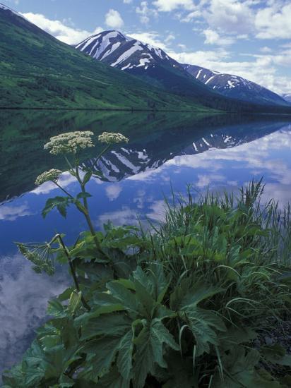 Summit Lake, Cow Parsnip, Lake and Mountains, Alaska-Rich Reid-Photographic Print