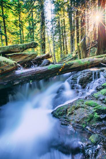Sun and Panther Creek Flowing Through Forest, Columbia River Gorge, Washington-Vincent James-Photographic Print