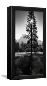 Sun Behind Pine Tree, Half Dome, Yosemite Valley, California, USA