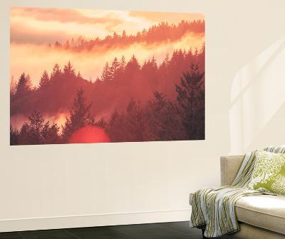 Sun Burned Fog Mount Tamalpais, Marin County, San Francisco-Vincent James-Wall Mural