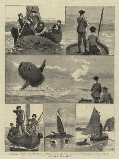 Sun-Fish Shooting-Joseph Nash-Giclee Print