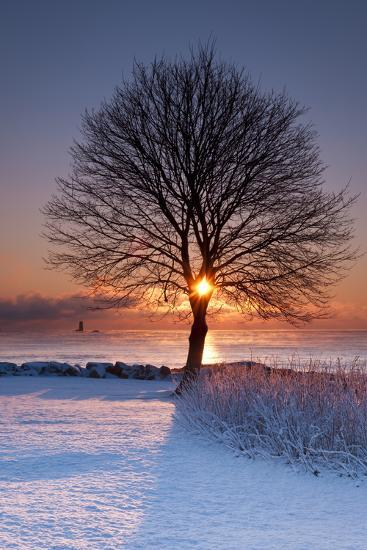 Sun In Tree-Michael Blanchette Photography-Photographic Print