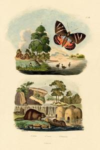 Sun Moth, 1833-39
