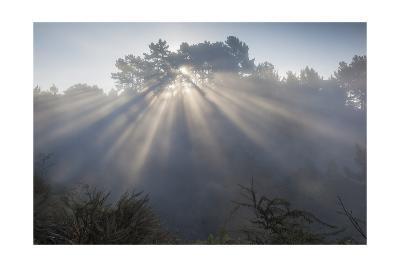 Sun Rays Through Trees 1-Henri Silberman-Photographic Print
