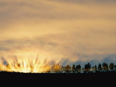 Sun Rising from Behind the Trees on a Foggy Morning-Annie Griffiths Belt-Photographic Print