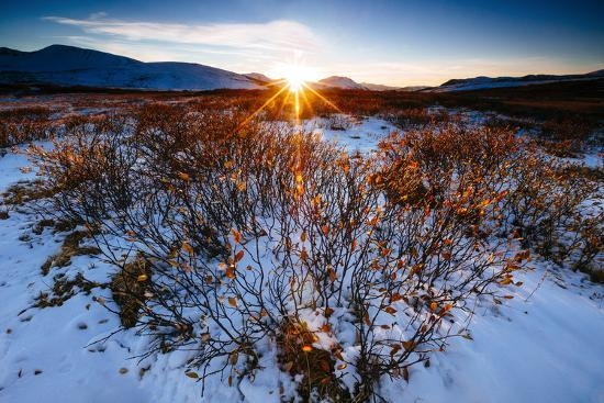 Sun Sets Over Low Lying Shrubs, Summit Of Independence Pass Hwy 82 E Of Aspen, CO-Jay Goodrich-Photographic Print