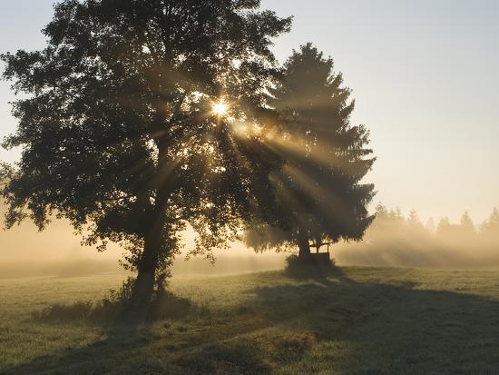 Sun Shining Through Trees and Morning Mist, Upper Bavaria, Germany-Konrad Wothe-Photographic Print