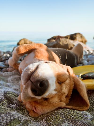 Sunbathing Dog Portrait- soloway-Photographic Print