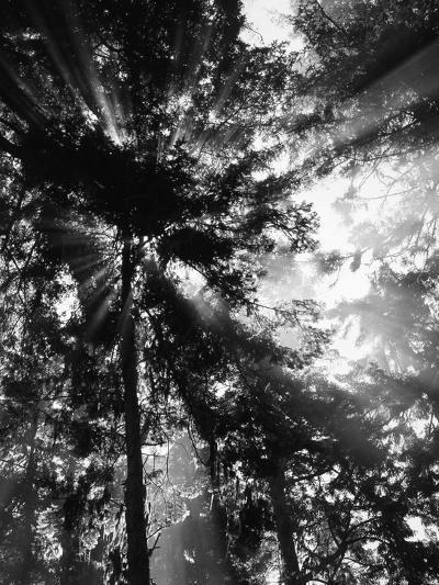 Sunbeam Passing Through Trees, Olympic National Park, Washington State, USA-Adam Jones-Photographic Print