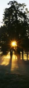 Sunbeam Radiating Through Trees, Woodford County, Kentucky, USA