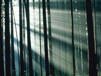https://imgc.artprintimages.com/img/print/sunbeams-streaming-through-forest_u-l-pzkqtv0.jpg?p=0