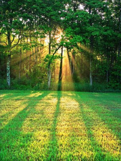 Sunbeams Through the Trees--Photographic Print