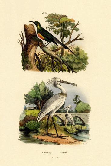 Sunbird, 1833-39--Giclee Print