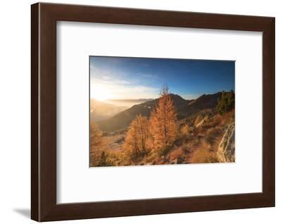 Sunburst on colorful larches during fall season, Alpe Arcoglio Valmalenco, Valtellina-Roberto Moiola-Framed Photographic Print