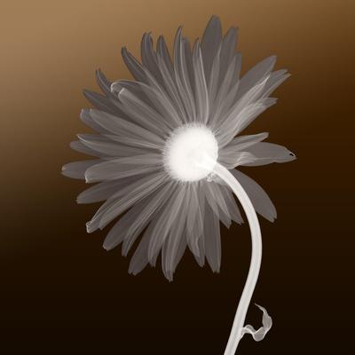 https://imgc.artprintimages.com/img/print/sunburst-petals-brown-background_u-l-q13ebv90.jpg?p=0