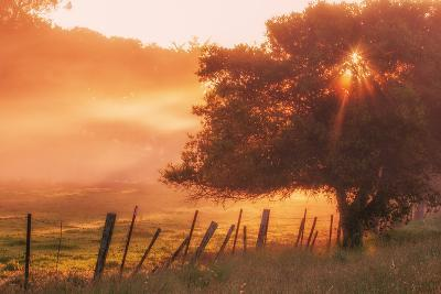 Sunburst Tree, Sunrise in Petaluma, Sonoma Valley, California-Vincent James-Photographic Print
