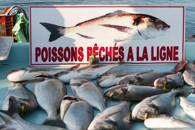 Sunday Fish Market at Vieux Port-Nico Tondini-Photographic Print