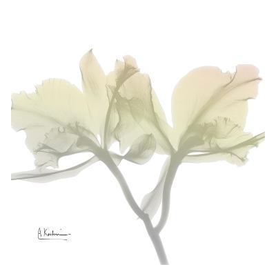 Sunday Morning Orchid-Albert Koetsier-Art Print
