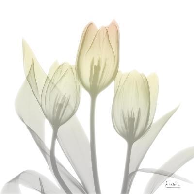 Sunday Morning Tulips Two-Albert Koetsier-Art Print