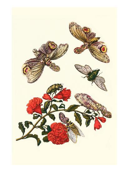 Sundown Cicada and a Peanut-Headed Lantern Fly-Maria Sibylla Merian-Art Print