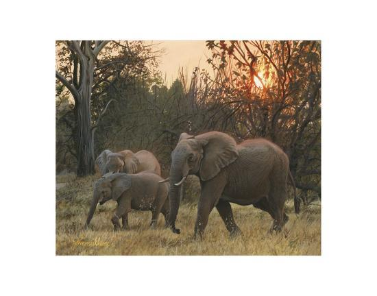 Sundown Elephants-John Mullane-Art Print