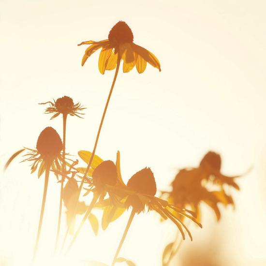 Sundown Flowers-Mandy Lynne-Art Print