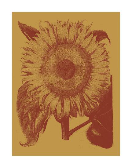 Sunflower 15-Botanical Series-Art Print