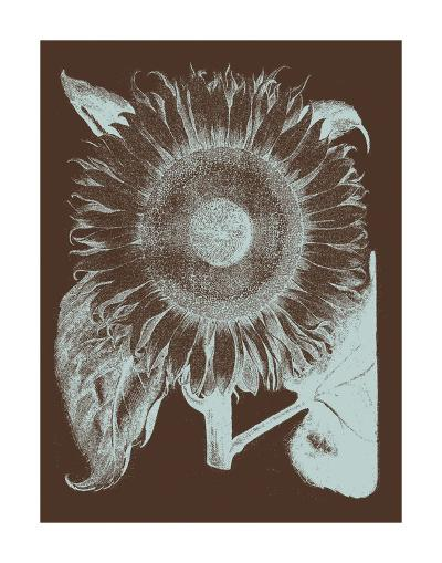 Sunflower 17-Botanical Series-Art Print