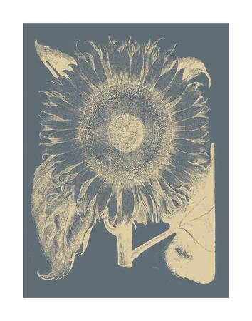 https://imgc.artprintimages.com/img/print/sunflower-2_u-l-f8cmgz0.jpg?p=0