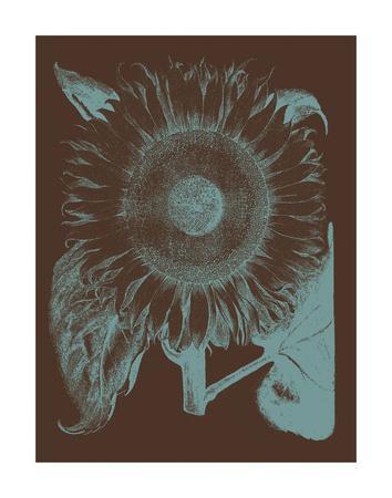 https://imgc.artprintimages.com/img/print/sunflower-6_u-l-f8cmly0.jpg?p=0