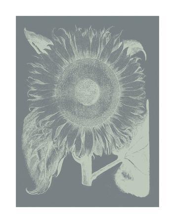 https://imgc.artprintimages.com/img/print/sunflower-7_u-l-f8cmo30.jpg?p=0