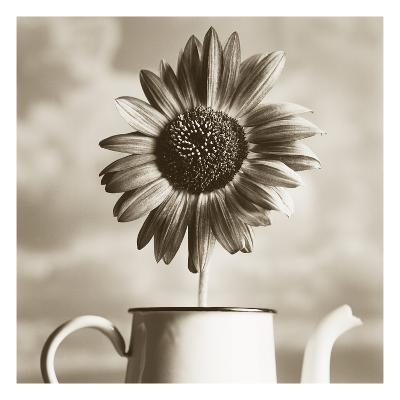 Sunflower Clouds-TM Photography-Premium Photographic Print