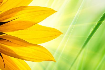 Sunflower Flower over over Green Floral Background-logoboom-Photographic Print
