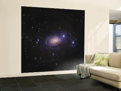 Sunflower Galaxy--Wall Mural – Large
