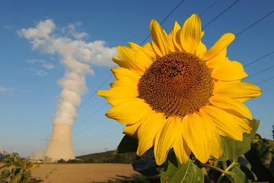Sunflower, in Front of a Nuclear Power Plant--Photo