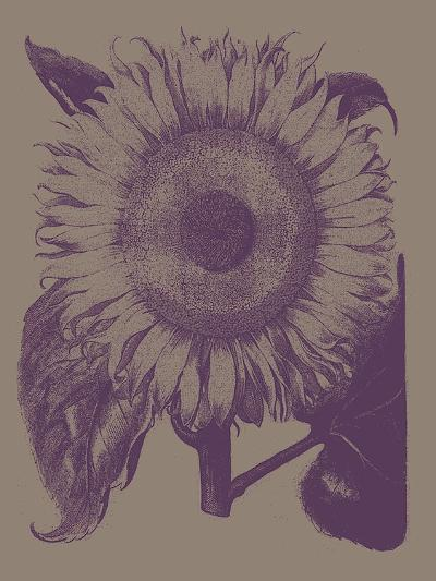 Sunflower, no. 14--Art Print