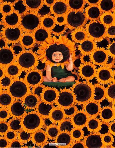 Sunflower Wall-Anne Geddes-Art Print