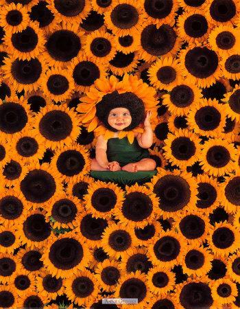 https://imgc.artprintimages.com/img/print/sunflower-wall_u-l-f1oten0.jpg?p=0