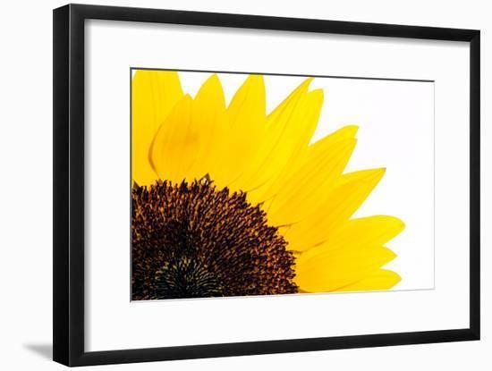 Sunflower-PASIEKA-Framed Photographic Print
